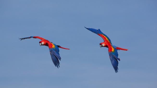Volnoletectví aneb Dejte papouškovi volnost