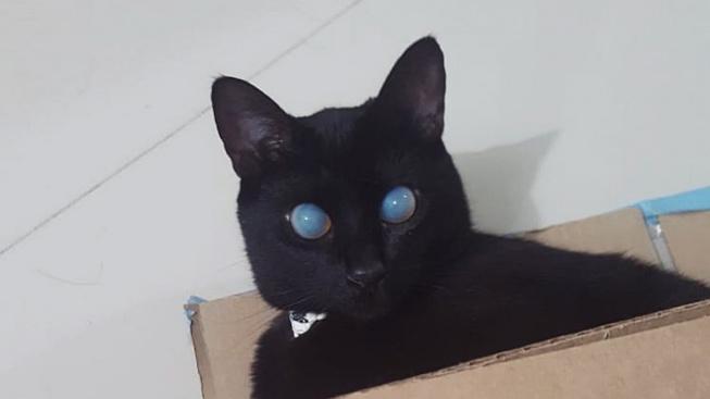 Černá slepá kočka děsí i fascinuje internet