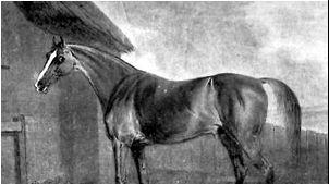 Kůň s podivným jménem Potoooooooo