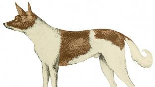 Yagánský pes (podle barevného tisku 1863)