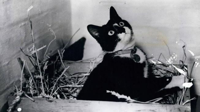 Simon - jediný kocour, který získal válečnou medaili za odvahu