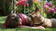 Psi rozumí mluvenému slovu stejně jako lidé