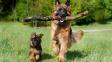 Co určuje délku psího života?
