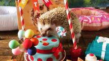 Roztomilý ježeček
