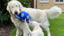 Slepecký pes pro psa