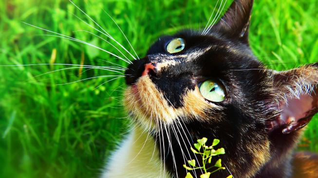 Kočičí rýma - běžné onemocnění, které může skončit smrtí