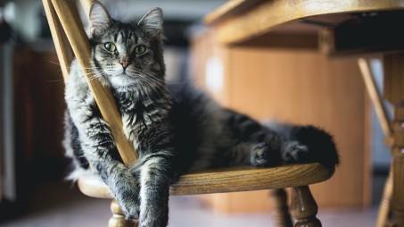 Proč každá kočka potřebuje škrabadlo a jak vybrat to nejlepší?