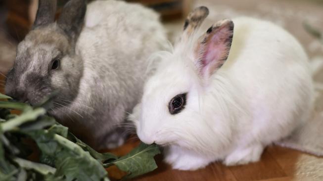 Co dělat, když králík nechce jíst