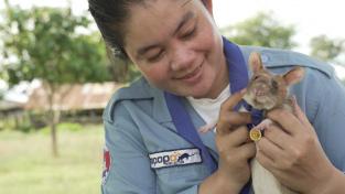 Magawa je vycvičená k vyhledávání nášlapných min. Za svou práci už získala britskou zlatou medaili pro odvážná zvířata