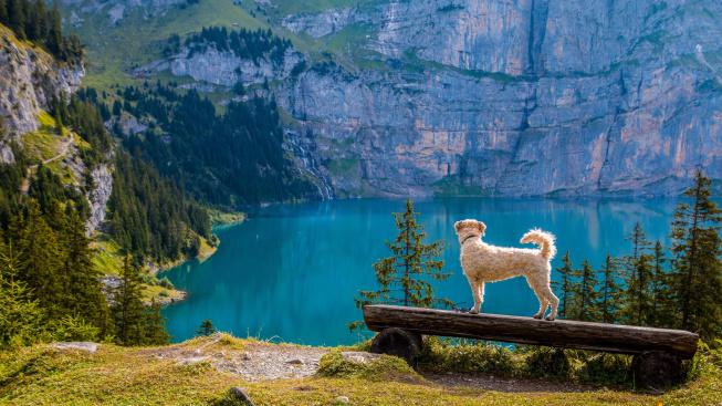 Praktické rady pro cestování s mazlíčkem
