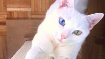 Kočka s šesti prsty