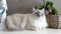 cat-1726023_1920