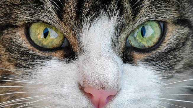 Řeč kočičích očí