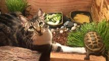 Přátelství kočky a želvy