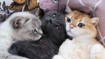 Kočičí čtveřice