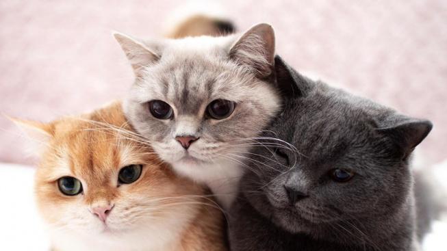 Kočičí kamarádi mají na internetu fanoušků skoro jako filmová celebrita