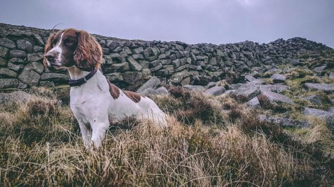 Rufus - pes, který zachraňuje veverky