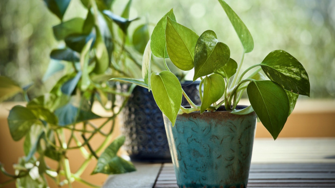 plants-3816945_1920