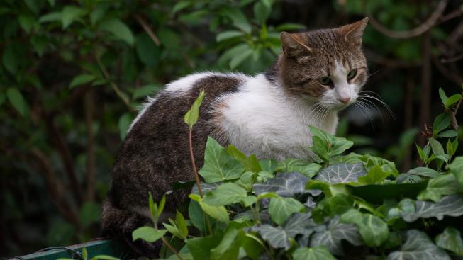 Pokojové rostliny, které mohou kočku otrávit