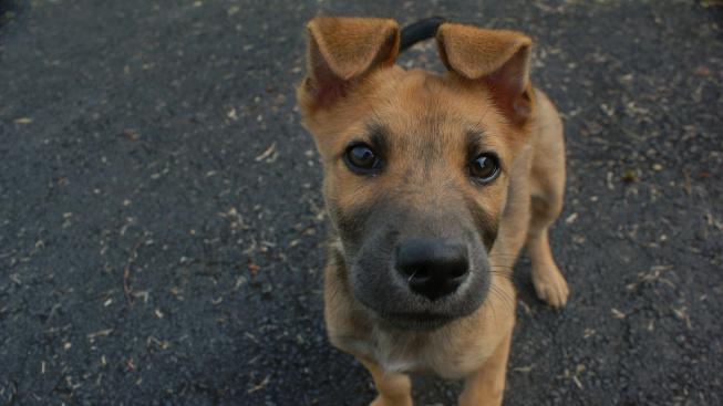 Řeč psího těla: Co znamenají stažené uši, přivření očí či 'úsměv'