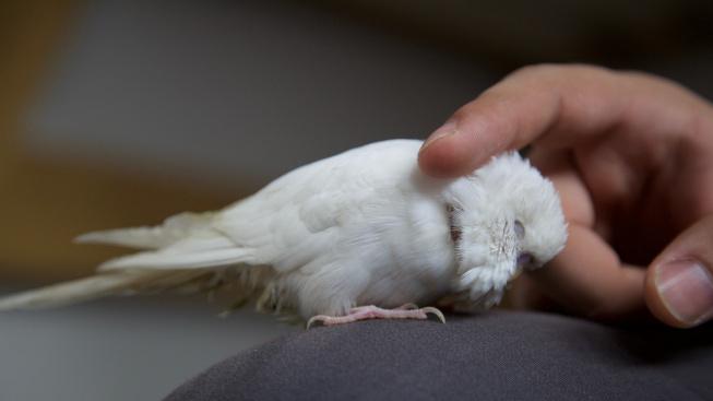 Jak si poradit se stresem u chovaných ptáků?