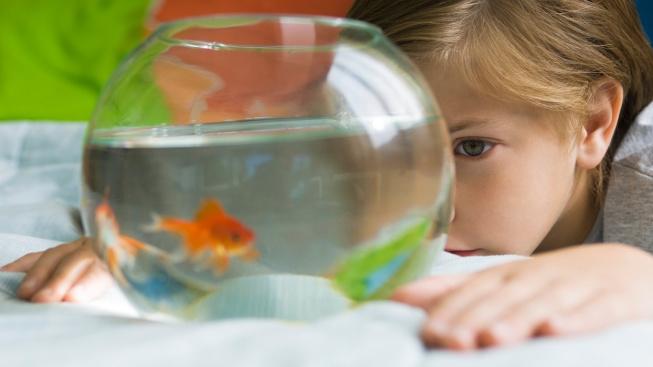 Začínáme s akvaristikou: Jaké zvolit akvárium