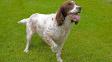 Řeč psího těla: Vrtění ocasu a zalehnutí páníčka neznamenají jen radost a lásku