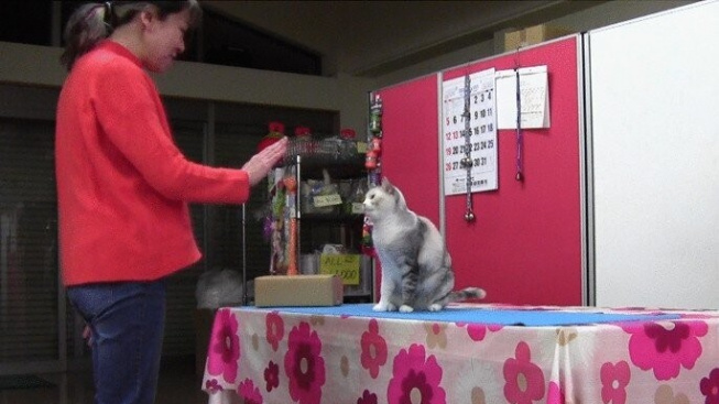 Kočka překvapila vědce napodobováním lidských gest