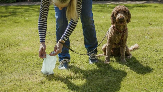 Co o zdraví psa vypovídá barva jeho výkalů?