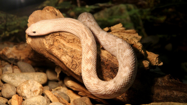 Jak hadům co nejvíc usnadnit období svlékání