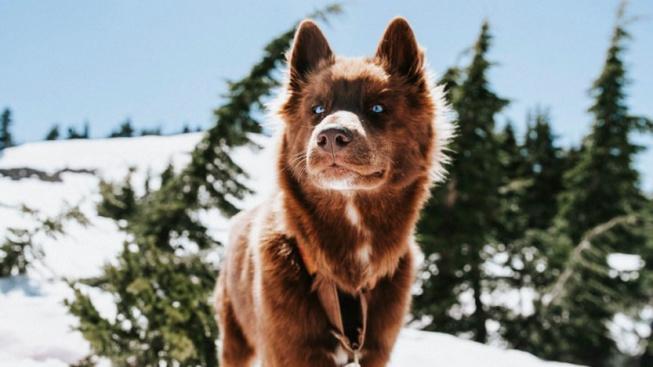 Pes, nebo vlk? Rozkošné štěně mate okolí