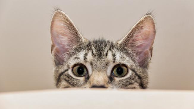Hra koček s laserovým ukazovátkem je nebezpečnější, než se může zdát