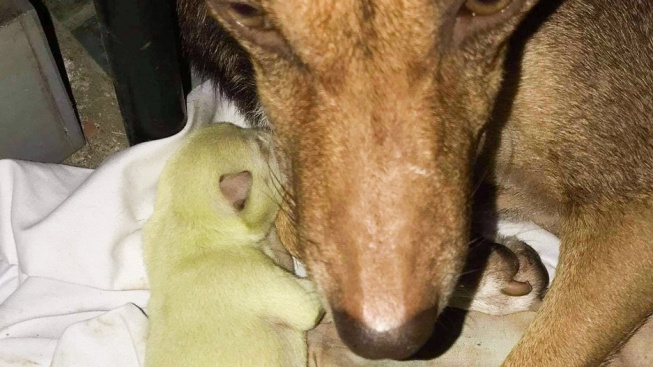 Fenka porodila zelené štěně, dostalo jméno Wasabi