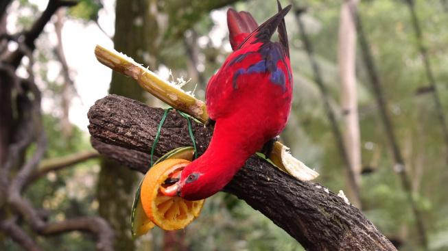 Pět tipů na domácí pamlsky pro papoušky