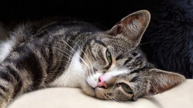 Kočky s lidmi skutečně komunikují mrkáním, potvrdily experimenty