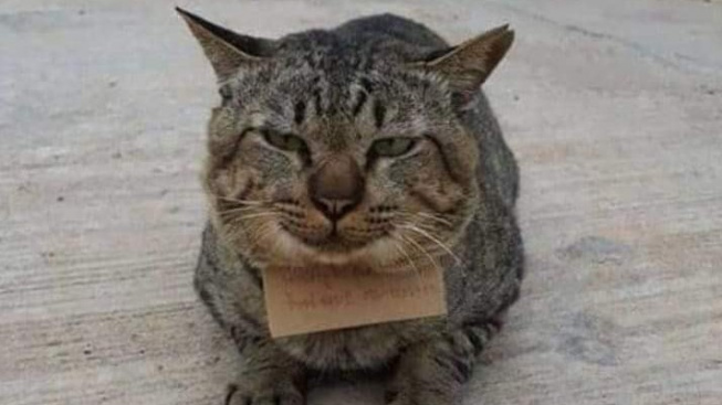 Kočka na tři dny zmizela... a vrátila se domů s dluhem!