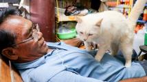 Kočičí masáž
