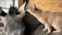 Kamarádství kočičky a oslice