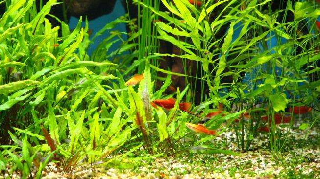 Začínáme s akvaristikou: Jak vybrat rostliny