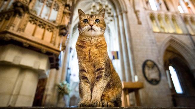 Doorkins Magnificat – kostelní kočka, která se dočkala vzpomínkové mše