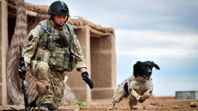 Británie ocení své psí válečné hrdiny národním pomníkem