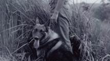 Pomník psích válečných hrdinů