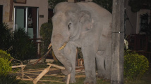 Kočka zahnala slona