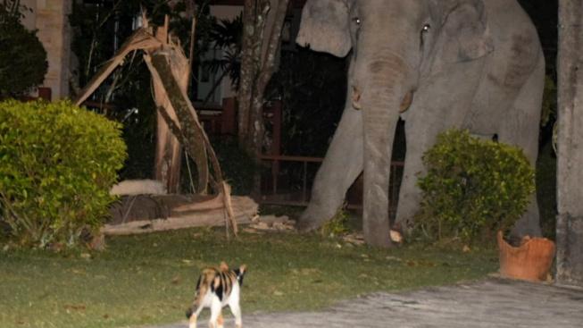 Když se kočka naštve, uteče před ní i slon