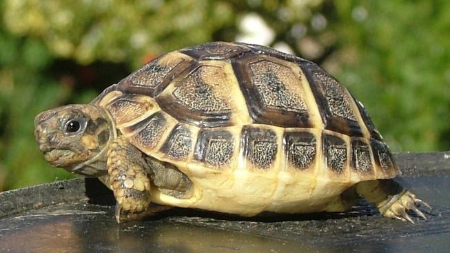 Chov želv: Úvod o želvách