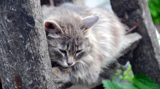 Jak u kočky poznat depresi