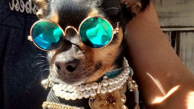 Psí Popelka: Jak opuštěný kříženec k luxusu přišel