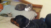 Záchranář koťátek