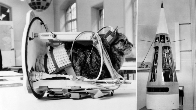 Félicette, první kočka ve vesmíru, se brzy dočká svého pomníku