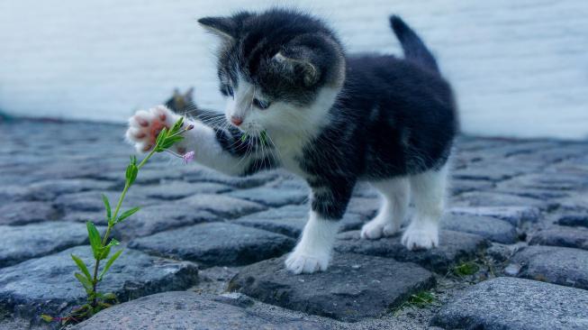 Kotě: Co čekat v prvních šesti týdnech života